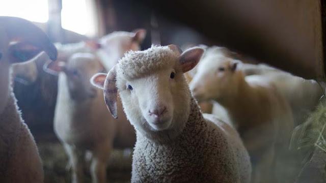 Χρήματα σε κτηνοτρόφους και της Αργολίδας για εξυγίανση του ζωικού κεφαλαίου