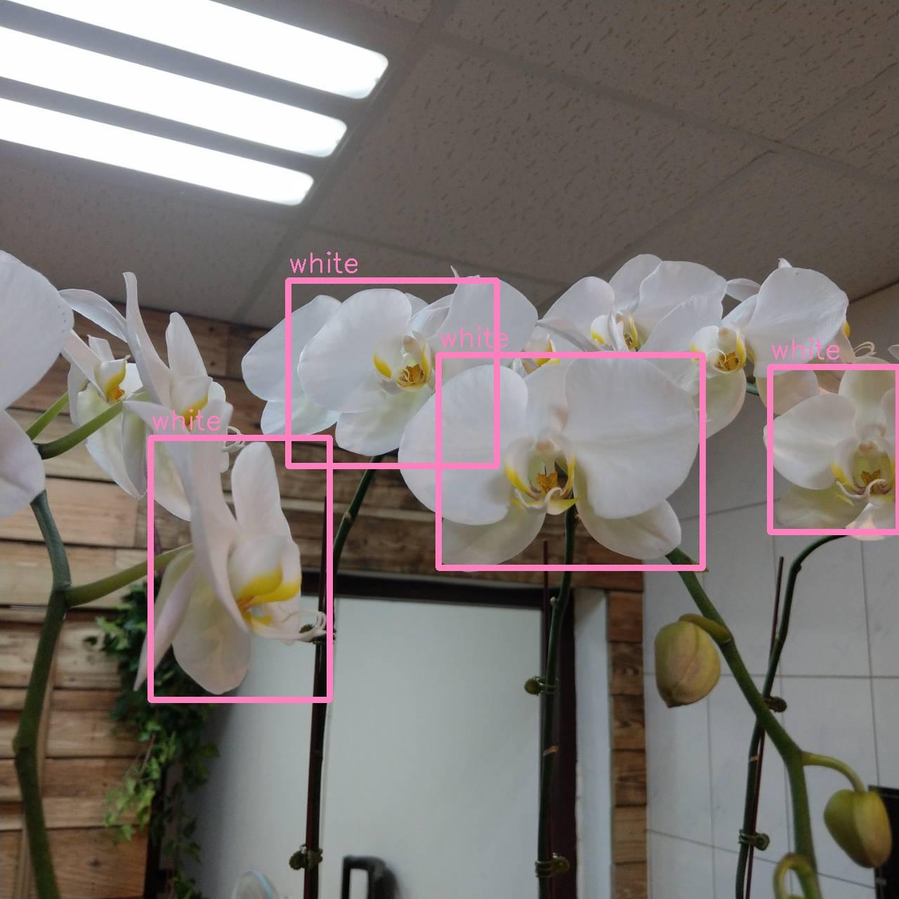 IT Robotics Lab: 訓練自己的偵測物件--YOLO
