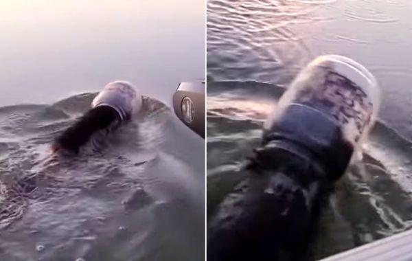 Видео: мужчина спас медведя из пластиковой банки на озере