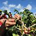 Nalar Hidup Petani, Pengetahuan yang Terpinggirkan dan Hilang