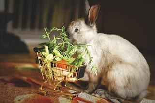 Cara merawat kelinci, makanan kelinci
