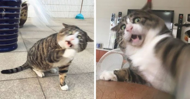 With An Antisocial Face, This Cat Becomes Famous In Social Media