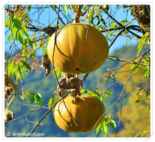 Hanging Pumpkins (Hanging Food)