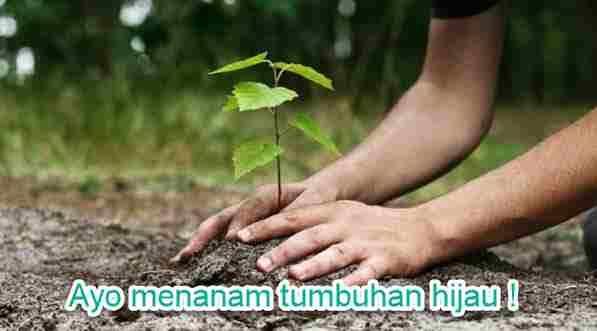ayo menanam tumbuhan hijau
