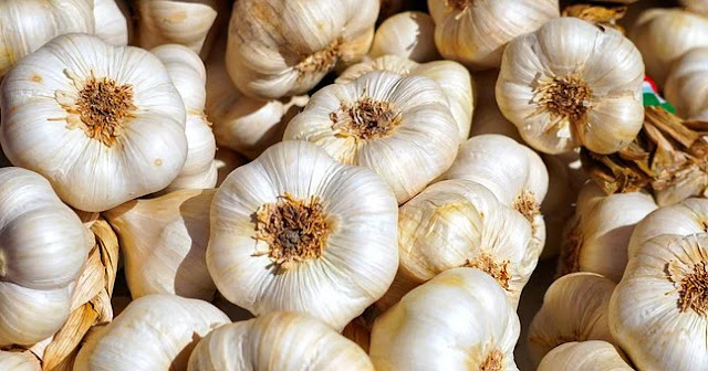 The incredible story of best way to store garlic