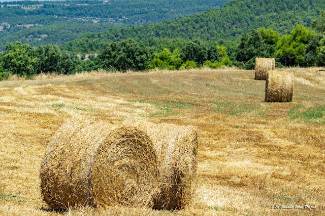 Pasto para el Invierno en Matarraña