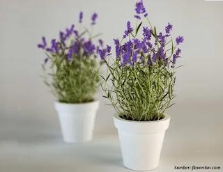 Cara Mengusir Lalat dengan Wangi Bunga Lavender