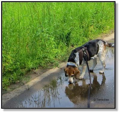 Tierisches - endlich Regen
