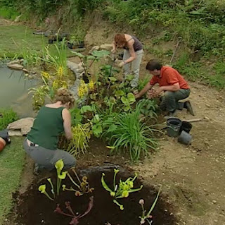 Further plants are planted around the pond and bog garden
