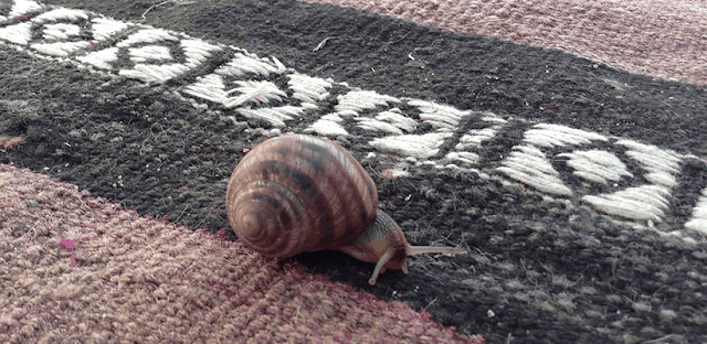 Ways To Deal with Snail Traps On Carpet