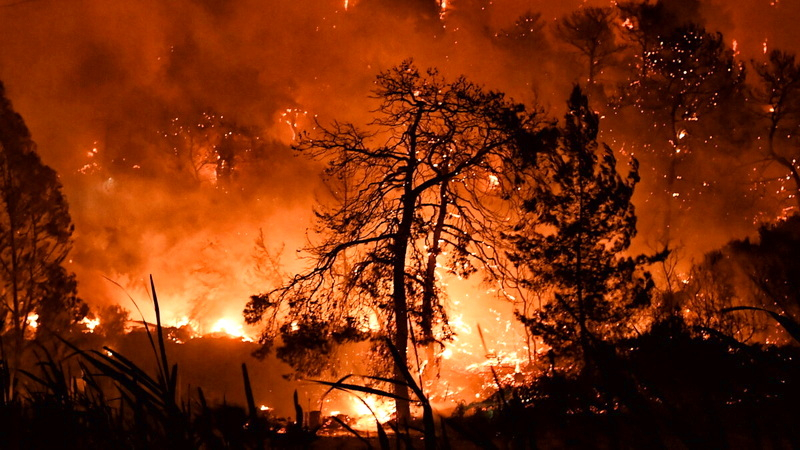 Ανακοίνωση του Τμήματος Δασολογίας του ΔΠΘ για τις πρόσφατες Δασικές Πυρκαγιές