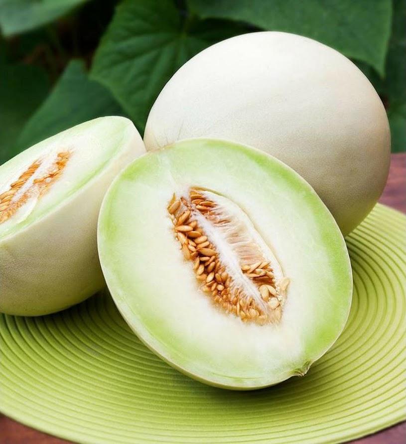 Benih Buah Melon Putih Greenflesh Honeydew Daily Farm Sumatra Barat