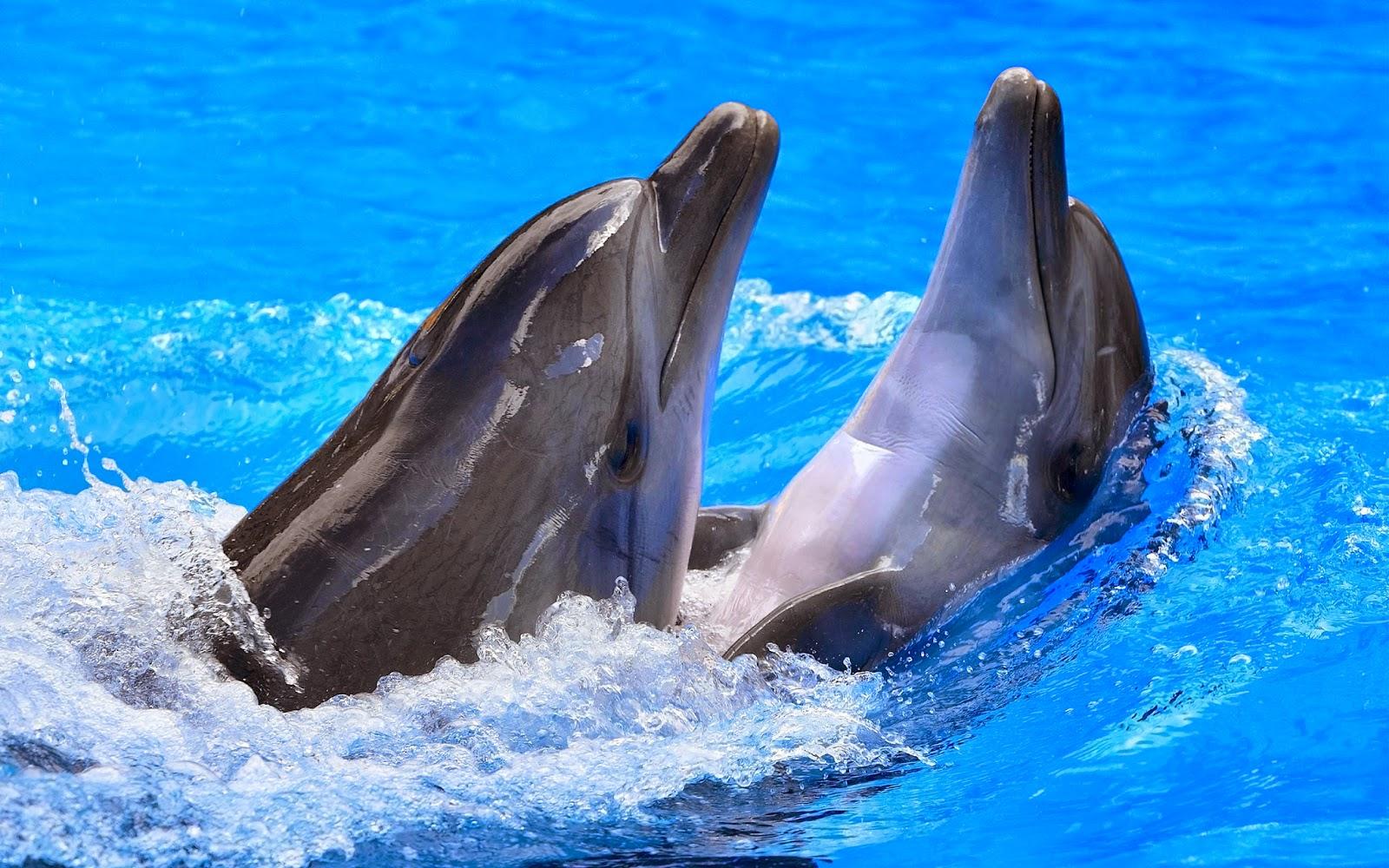 jenis macam gambar hewan mamalia laut air freewaremini rh frewaremini com