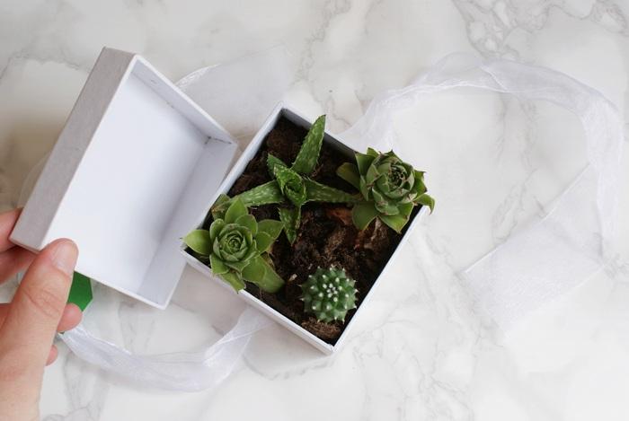 succulents box gift diy francinesplaceblog