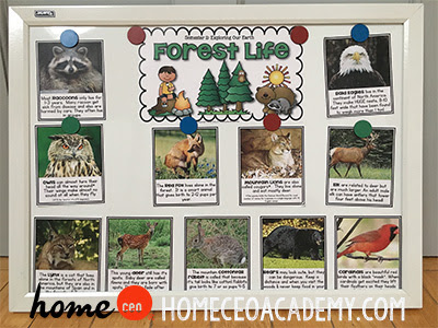 https://www.teacherspayteachers.com/Product/Forest-Life-Week-16-Age-4-Preschool-Homeschool-Curriculum-by-Home-CEO-2504803