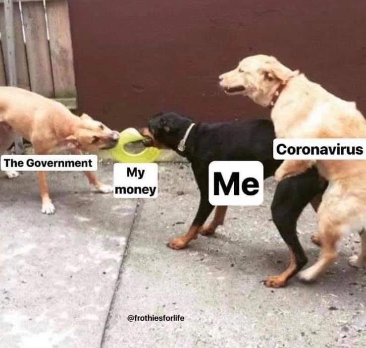 three-dogs-memes
