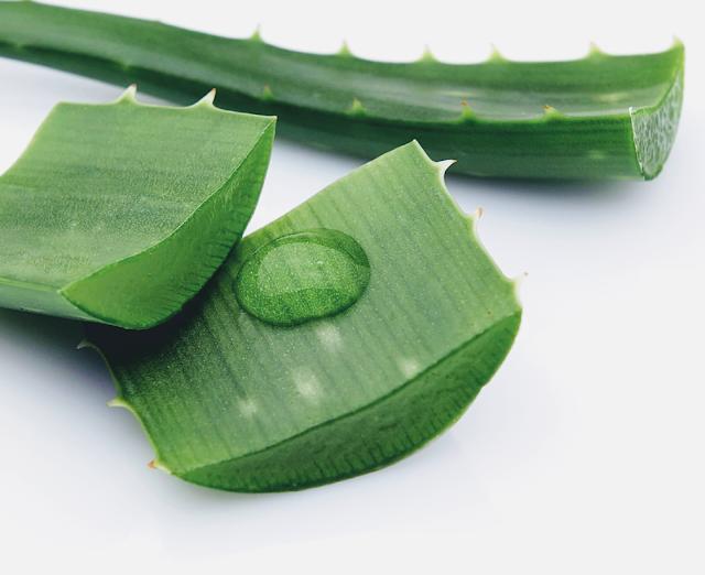 Homemade Aloe Vera Leave-In Conditioner