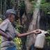 Manfaat Air Nira Untuk Kesehatan Tubuh