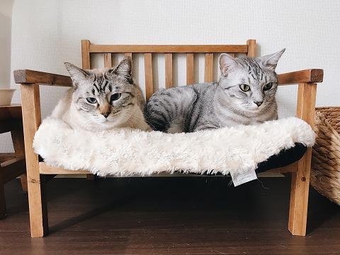 猫用ベンチでぼーっとしてる2匹の猫