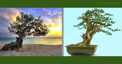 Bonsai Inspiration 4
