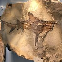 Mototurismo in Lessinia: Museo dei Fossili di Bolca
