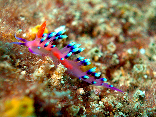 Miri Macro Photography Diving