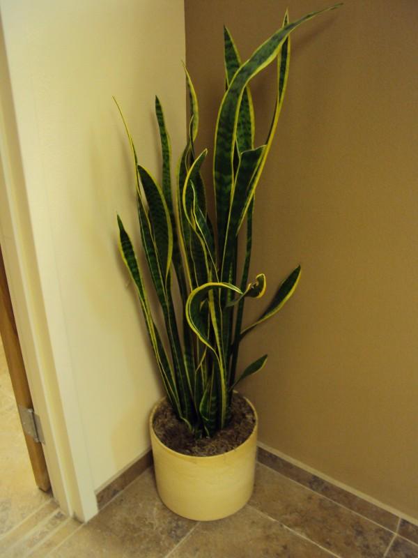El cristiano dios sabe cuanto sol necesitamos - Plantas de interior que necesitan poca luz ...