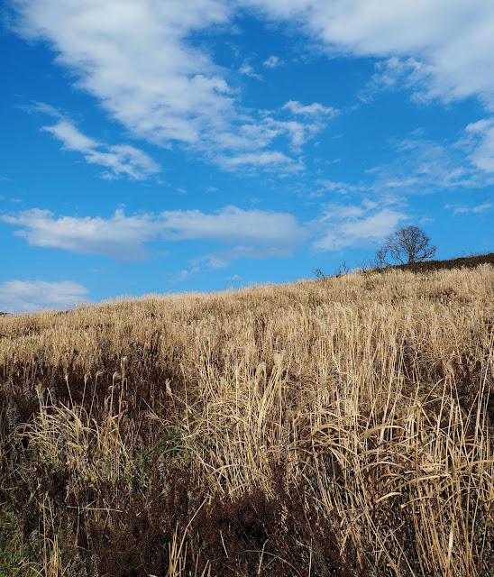 Владивосток, остров Русский, мыс Тобизина – заросли травы