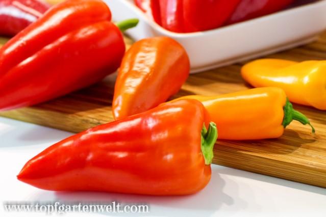 Gefüllte Paprika selber machen - Foodblog Topfgartenwelt