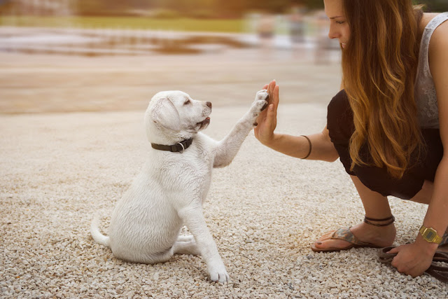 Teach people how to use positive reinforcement dog training. Photo shows puppy high-five