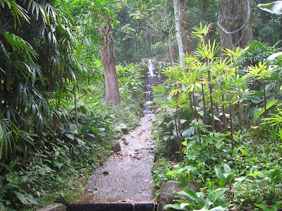 Cascada, Jardín Botánico, jardim Botânico, Rio de Janeiro, Brasil, La vuelta al mundo de Asun y Ricardo, round the world, mundoporlibre.com