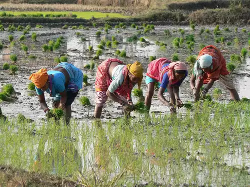 Why Indian farmer needed a way out of agriculture into ...