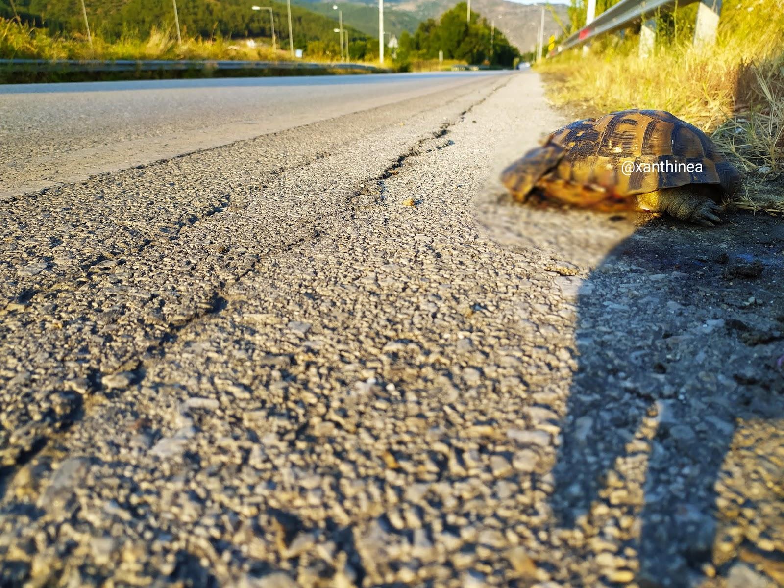 Νεκροταφείο ζώων οι δρόμοι στην Ξάνθη – ΦΩΤΟ