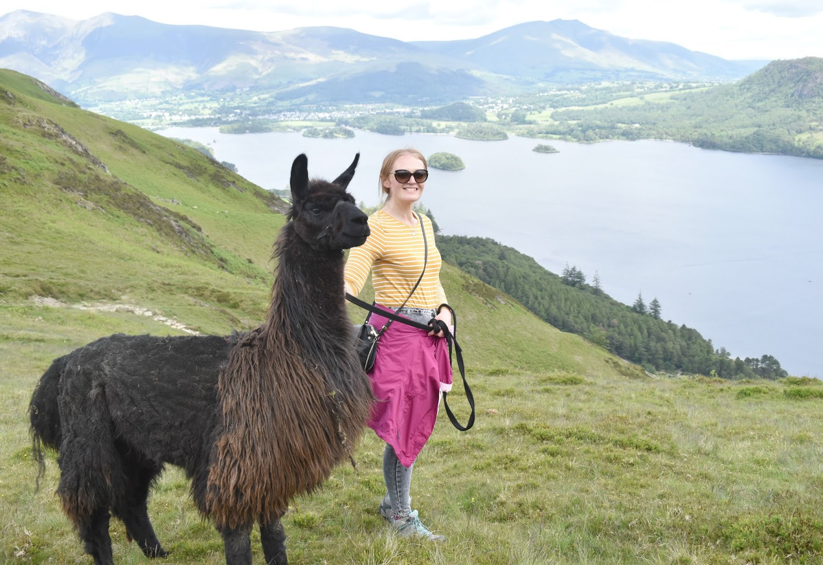 Once Upon a Llama in Lake District - Llama Trekking
