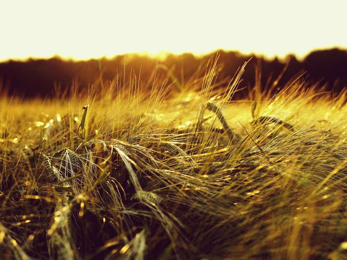 Отсутствие возможности формирования земельного участка