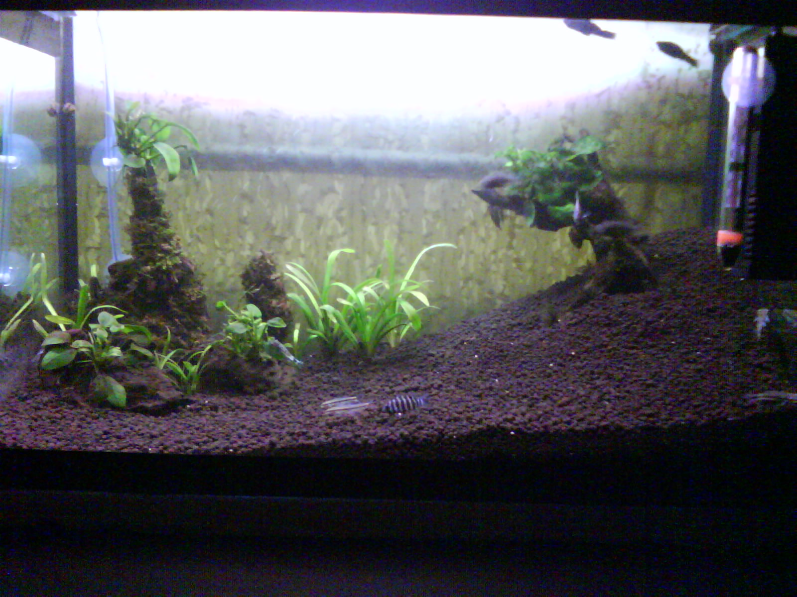 Aquabie New Planted Tank Setup Mann