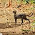 Gato-do-mato ameaçado de extinção é registrado em UC no Tocantins