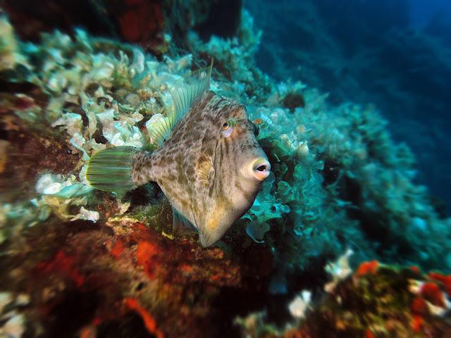 υποβρύχια φωτογραφία απο τον Σαρωνικό κολπο Κώστας λαδάς