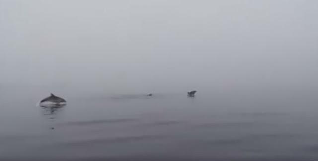 Εύβοια: Δελφίνια κάνουν βουτιές στη παραλία των Πολιτικών (ΒΙΝΤΕΟ)