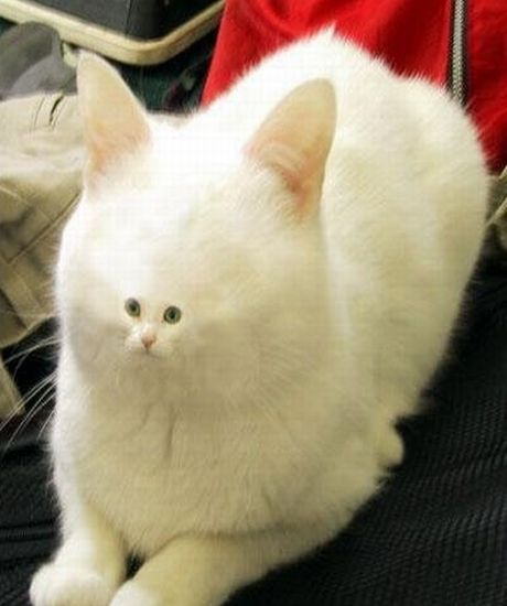 Funny Image Gallery: Funniest and cute cat pictures in the ...  Funny Image Gal...