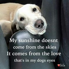 Sunshine doesnt come from the skies, it comes from the love that's in my dogs eyes