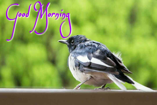 sparrow good morning bird image