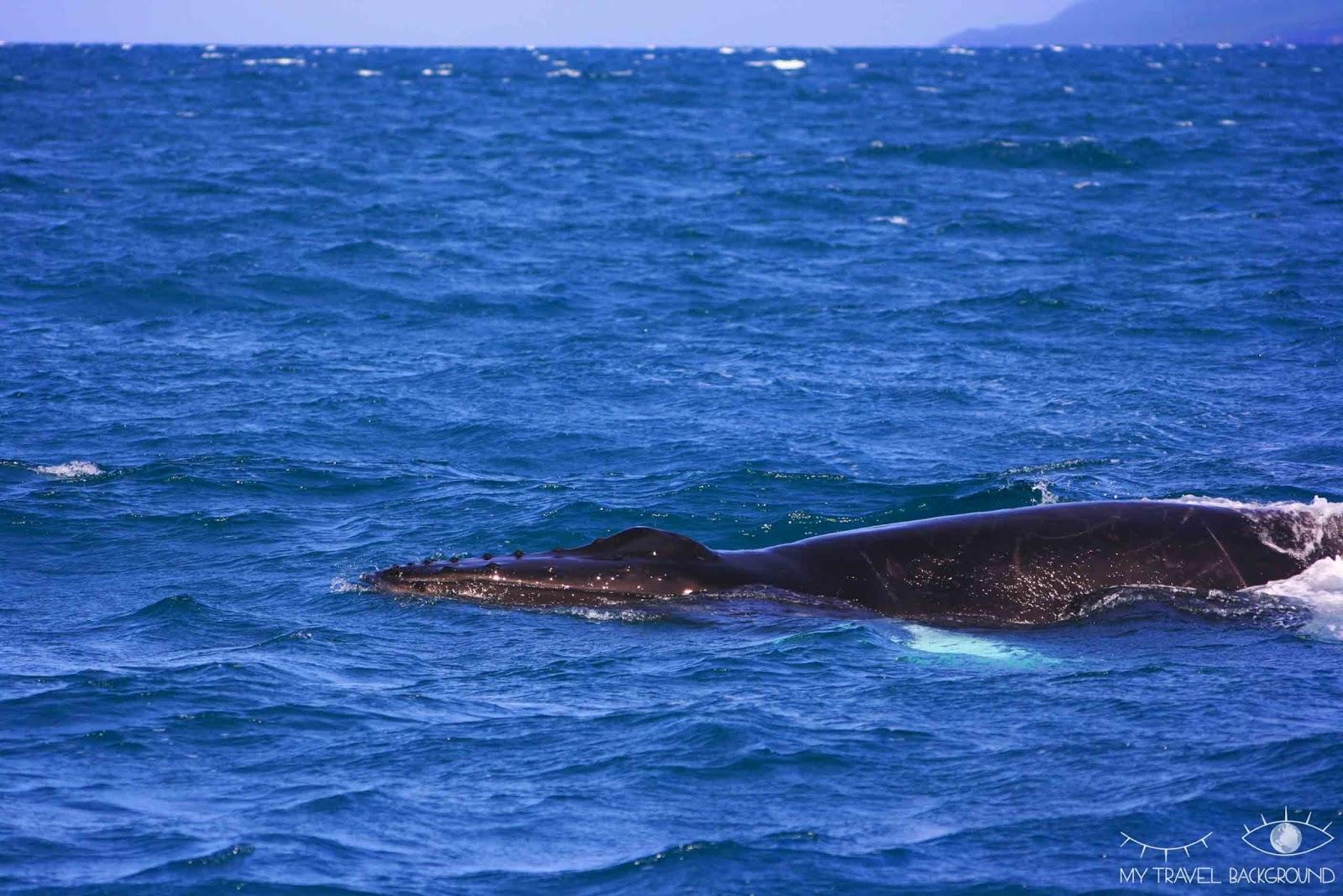 My Travel Background : 18 lieux à découvrir absolument en Islande, observer les baleines