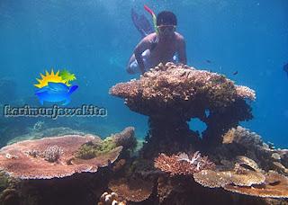 paket wisata bawah laut karimunjawa