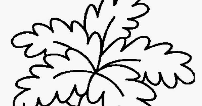 Mewarnai Gambar Pohon Dan Buah Kelapa Gambarmugo