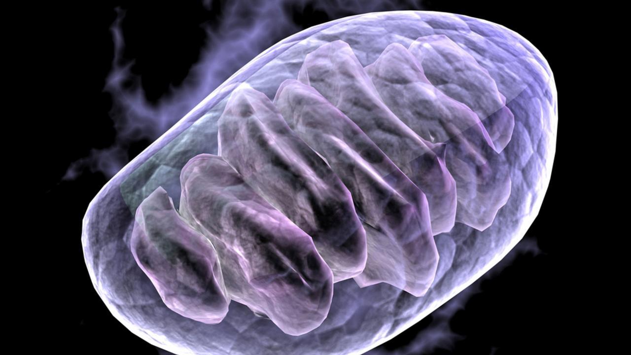 علاج الميتوكوندريا الجيني ينجح في التصويت النهائي بالمملكة المتحدة