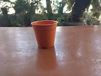 succulent pots in Ahmedabad