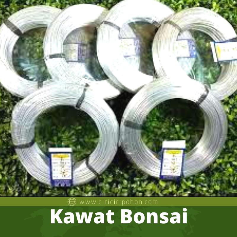 Kawat Bonsai