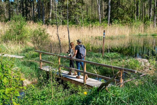 Premiumwanderweg DonAUwald | Etappe 2 von Offingen nach Gundelfingen 10