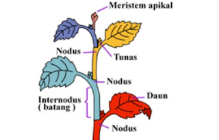 http://www.sigerpendidikan.com/2016/10/pengertian-jaringan-meristem-dan-contoh.html